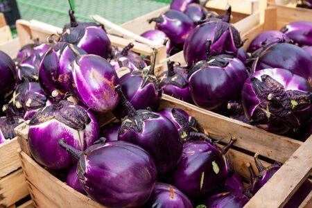 round: round eggplants in boxes