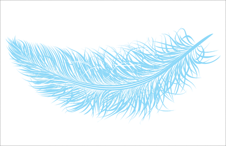 Vector beautiful crows feather.