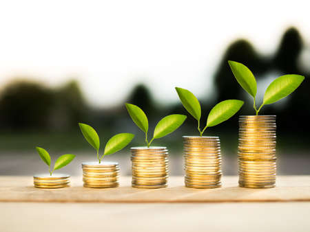 coins and money growing plant for finance and banking, saving money or interest increasing concept