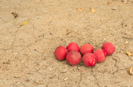 a pile of red petel nut