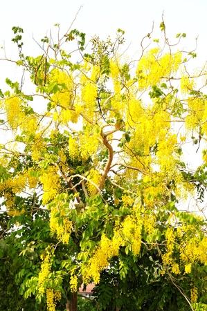 yellow flower Stock Photo - 13348866