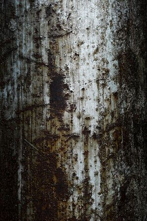 Rusted steel tin abstract pattern photo