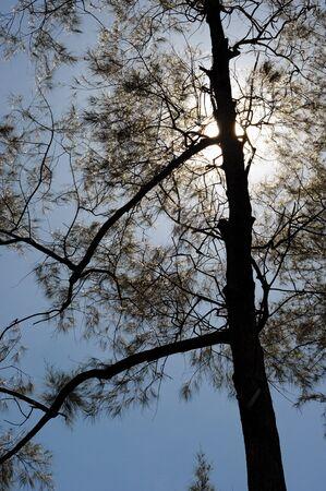 tree photo