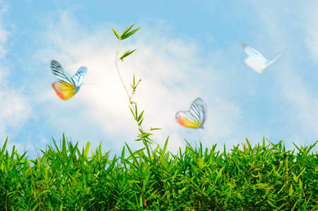 grass and butterfly  Stock Photo