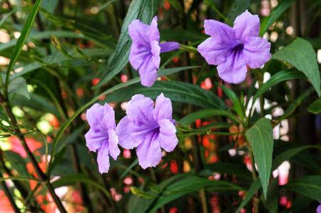 violet flower Stock Photo