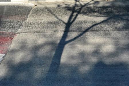 shadow: shadow