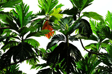 leaf Standard-Bild