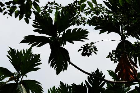 shadow of leaf