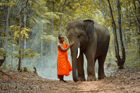 Young elephant and Monk in forest ,vintage style