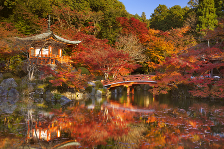 japanese maple: Japanese maple trees in full autumn colours around the Benten-do Hall of the Daigo-Ji Temple  in Kyoto, Japan.