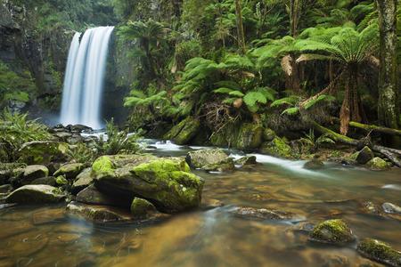 Chute d'eau dans une forêt tropicale luxuriante. Photographié à des chutes Hopetoun dans le parc national Great Otway à Victoria, en Australie.