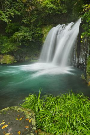 The Shokeidaru waterfall  along the Kawazu Nanadaru waterfall trail on the Izu Peninsula of Japan.