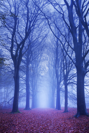 solitude: A path in a dark and foggy forest. Photographed at dawn. Stock Photo