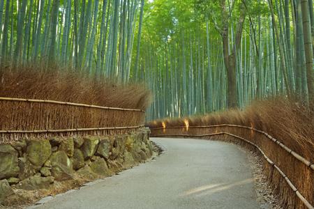 A path through a bamboo forest. Photographed at the Arashiyama bamboo grove near Kyoto, Japan.