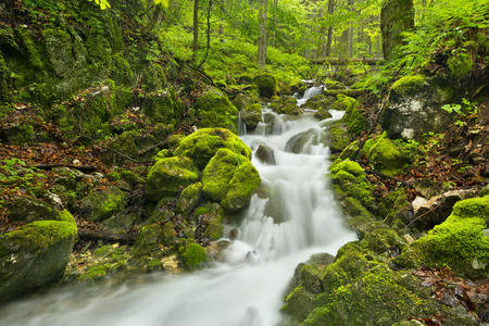 A waterfall in a lush gorge in Slovensk Raj in Slovakia. Stockfoto