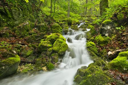 A waterfall in a lush gorge in Slovensk Raj in Slovakia. Archivio Fotografico