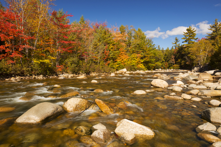 Multi-coloured fall foliage along a river. Photographed at the Swift River, White Mountain National Forest in New Hampshire, USA.