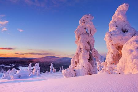 리바이스의 상단에 고정 된 나무 핀란드 라플란드에 떨어졌다. 일몰 촬영. 스톡 콘텐츠