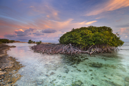 naturally: Mangrove trees in a tropical lagoon on Curaao, Netherlands Antilles