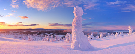 Frozen trees on top of the Levi Fell in Finnish Lapland. Photographed at sunset. Reklamní fotografie - 44295109