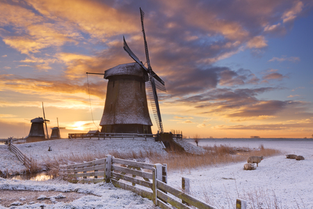schermerhorn: Traditional Dutch windmills on a beautiful winter morning at sunrise.