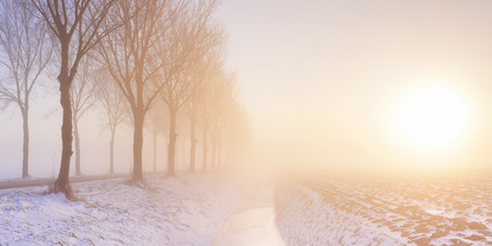 polder: A row of trees on a foggy morning at sunrise. A typical image from the historic Beemster polder in The Netherlands. This polder was drained as early as 1612 and is famous for its perfect grid of roads, canals and pastures that was superimposed on the new