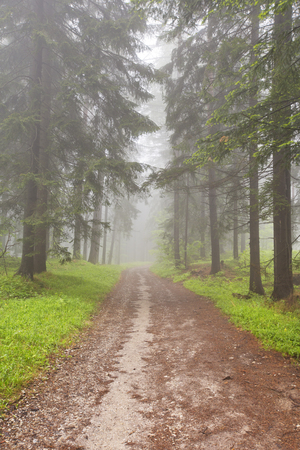 forest trees: A road through a foggy forest with tall trees in Slovensky Raj in Slovakia. Stock Photo