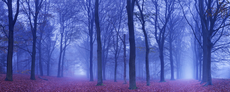 fall trees: A fork in a path in a dark and foggy forest. Photographed at dawn.