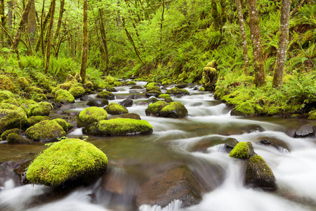 Gorton Creek through lush rainforest in the Columbia River Gorge, Oregon, USA. 스톡 콘텐츠