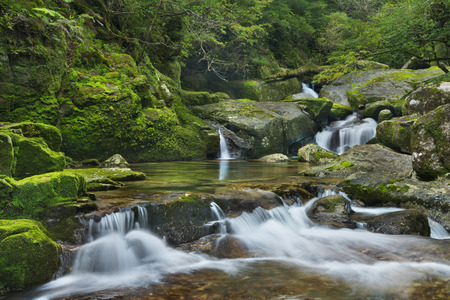 A river through lush rainforest on the southern island of Yakushima, Japan.