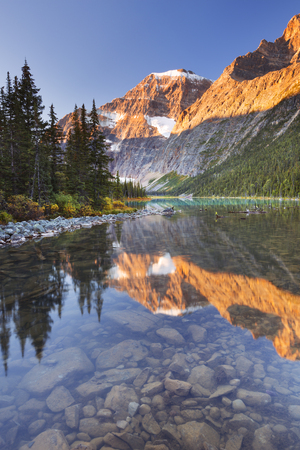 edith: Mount Edith Cavell reflected in Cavell Lake in Jasper National Park, Canada. Photographed at sunrise. Stock Photo
