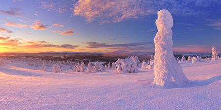 levi: Frozen trees on top of the Levi Fell in Finnish Lapland. Photographed at sunset.
