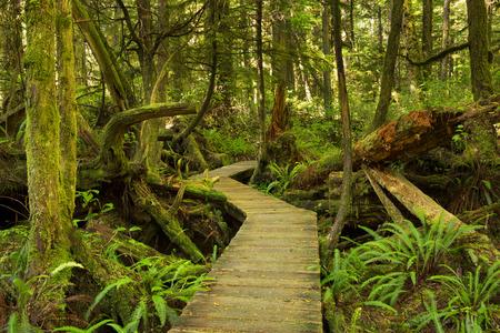 http://us.123rf.com/450wm/sarawinter/sarawinter1509/sarawinter150900157/45634816-un-camino-a-trav-s-de-una-exuberante-selva-tropical-en-la-costa-del-pac-fico-parque-nacional-de-rese.jpg?ver=6