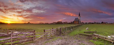 hoorn: The church of Den Hoorn on the island of Texel in The Netherlands at sunrise. A field with sheep and little lambs in the front.