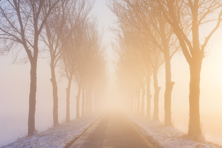 polder: A straight road and a row of trees on a foggy morning at sunrise. A typical image from the historic Beemster polder in The Netherlands. This polder was drained as early as 1612 and is famous for its perfect grid of roads, canals and pastures that was sup