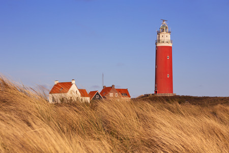 texel: The lighthouse of the island of Texel in The Netherlands surrounded by tall dune grass in beautiful early morning sunlight.