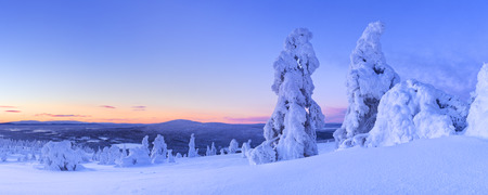 Frozen trees on top of the Levi Fell in Finnish Lapland. Photographed at dusk. Stock Photo