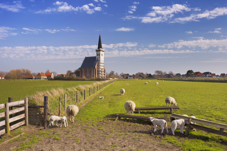 wadden: The church of Den Hoorn on the island of Texel in The Netherlands on a sunny day. A field with sheep and little lambs in the front. Stock Photo