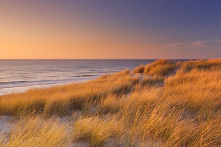 texel: Tall dunes with dune grass and a wide beach below. Photographed at sunset on the island of Texel in The Netherlands.