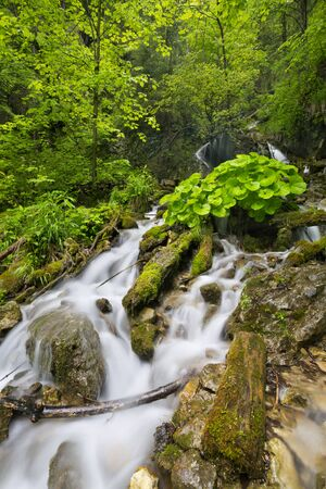 lush: A waterfall in a lush gorge in Slovensky Raj in Slovakia.