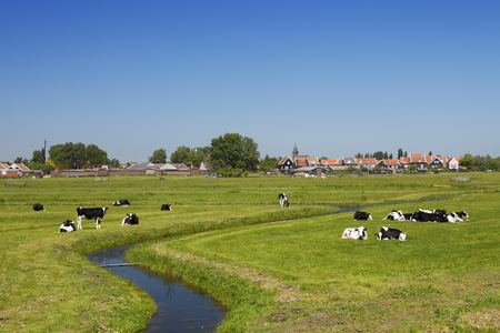 Cows and a distant village in typical Dutch polder landscape on the island of Marken. Reklamní fotografie - 52829591