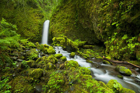 A hard-to-reach and remote waterfall in the backcountry of the Columbia River Gorge, Oregon, USA. 免版税图像