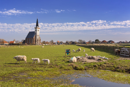 texel: The church of Den Hoorn on the island of Texel in The Netherlands on a sunny day. A field with sheep and little lambs in the front. Stock Photo
