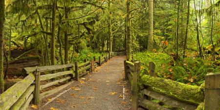 緑豊かな熱帯雨林の中のパスです。カナダ、バンクーバーの島の大聖堂グローブで撮影。