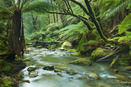 range of motion: A river running through a beautiful temperate rainforest. The runoff of the Beauchamp Falls in the Great Otway National Park, Victoria, Australia.