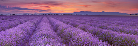 Wschód słońca nad kwitnące pola lawendy na płaskowyżu Valensole w Provence w południowej Francji. Zdjęcie Seryjne