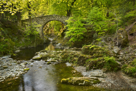 moss: Foleys Bridge over the Shimna River in Tollymore Forest Park, Northern Ireland.