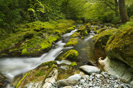 mourne: The Shimna River in Tollymore Forest Park in Northern Ireland. Stock Photo