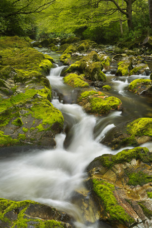 northern ireland: The Shimna River in Tollymore Forest Park in Northern Ireland. Stock Photo
