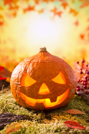 Jack OLantern in an autumn nature still life in bright light with copy space. Stock Photo
